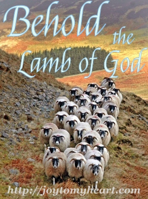 Behold the Lamb herd