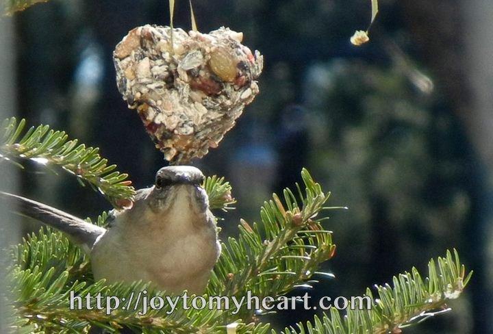 Haciendo ornamentos / alimentadores de la semilla del pájaro - BloominThyme