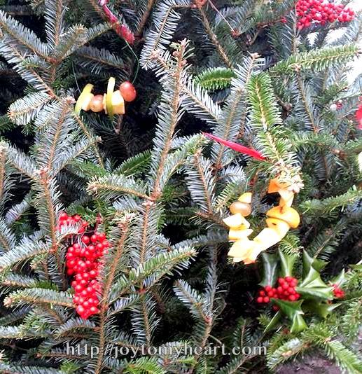 birdseed wreaths berries