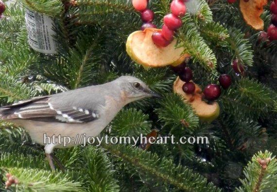 birdseed wreaths sheriff