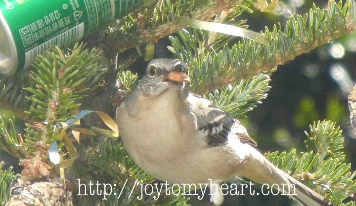 Thy Hath de la mano proporcionó: Birdseed Ornaments
