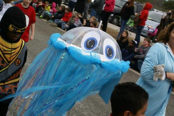 Stella jellyfish
