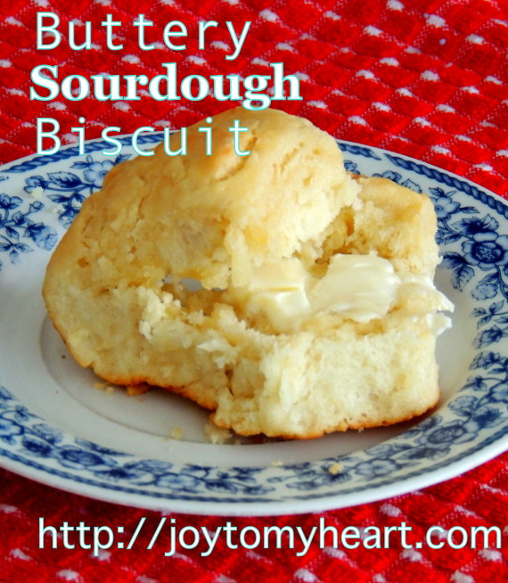 buttery sourdough biscuit one