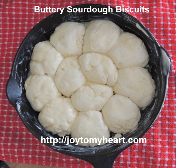 buttery sourdough biscuits dough